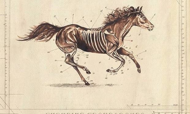 weird ass cover--it's a horse running with needles all through its side